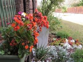 Sunbird flowers