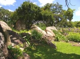 Rocks & agapanthas